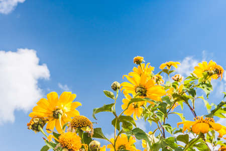Yellow flowers against blue cloudy sky photo