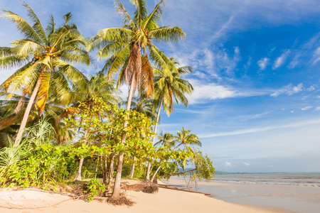 Bangsak beach in blue sky and palm trees at Phangnga, Thailand. photo
