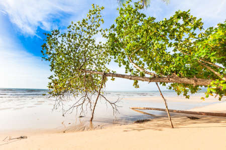 phangnga: Bangsak beach in blue sky and palm trees at Phangnga, Thailand. Stock Photo