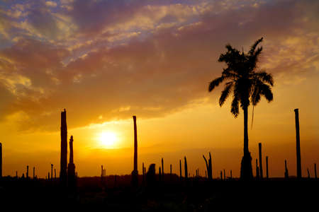 palm garden: silhouette Palm garden with sunset background