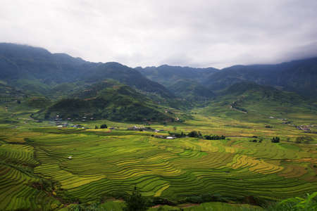rice terrace: Beautiful rice terrace in northern vietnam (Tule)