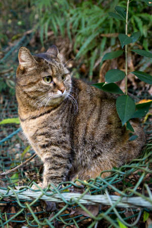 a lovely cat: A lovely cat in the nature