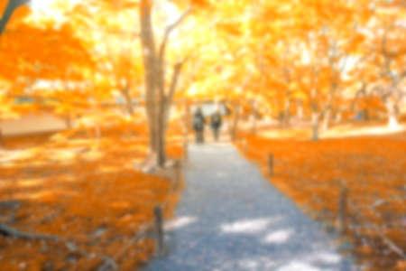 color in: borrosa árbol de arce (color naranja) en Kyoto, Japón