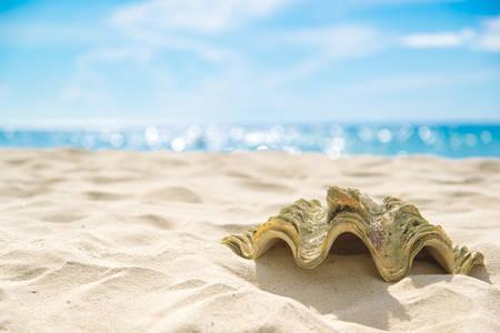 Shell on sand at beach and blue sky and bokeh sea Фото со стока