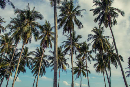 coconut tree pattern and blue sky in retro style.