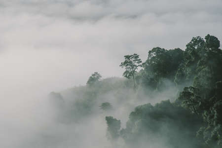 fog forest at high forest in Thailand.