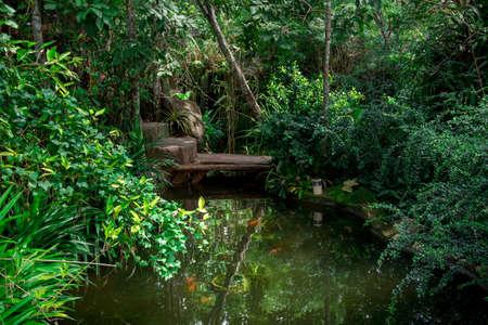 Green Garden with fish. Фото со стока