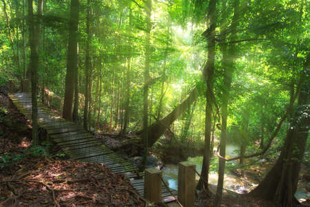 bridge in forest and sunray at Thailand.