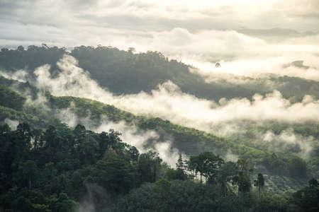 Fog in morning.