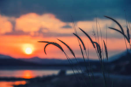 beautiful grass  in a sunset in retro style.