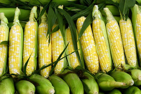 Fresh Corns at the Market
