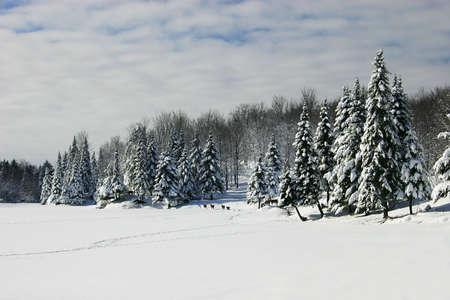 Deers are Walking Across a Frozen Lake photo