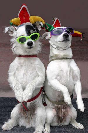 yetenekli: Komik köpekler
