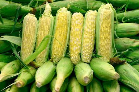 nonfat: Corn Arrangement 1 Stock Photo