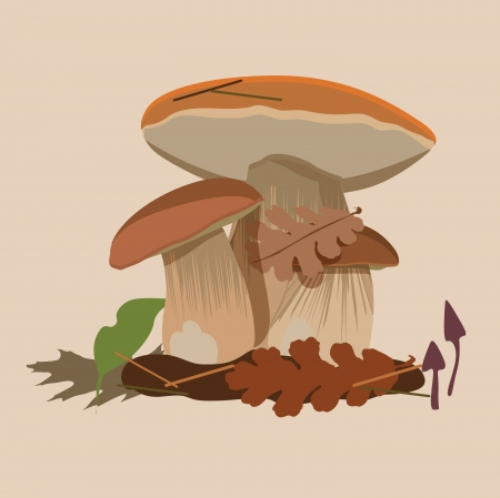 vector collection of forest mushrooms Stock Vector - 18464786