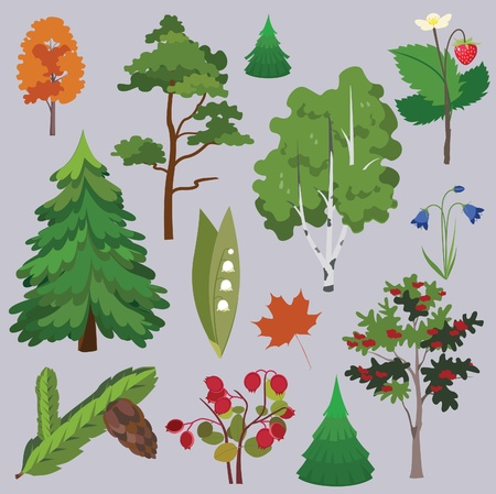 vector collection -of forest trees- of flowers and berries Stock Vector - 18464940