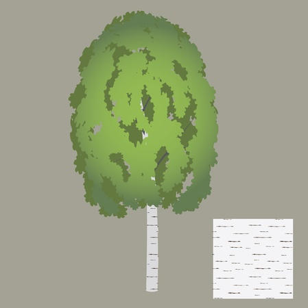 tree a birch with seamless texture of bark Vector
