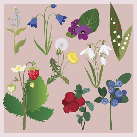 forest collection from flowers and berries Vector