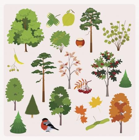 albero nocciola: grande collezione di alberi della foresta realistici, tasti, lascia Vettoriali