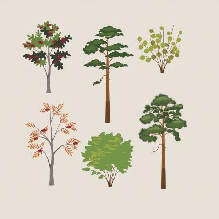 lindeboom: collectie van bos bomen illustratie Stock Illustratie
