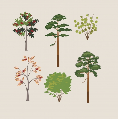 collection of forest trees  illustration Illustration