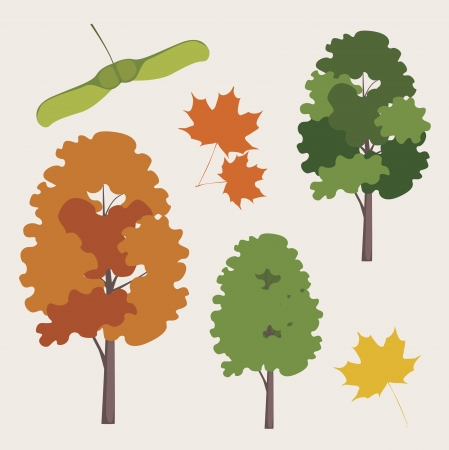 city Canadian maple ordinary  with a leaf and seeds Vector