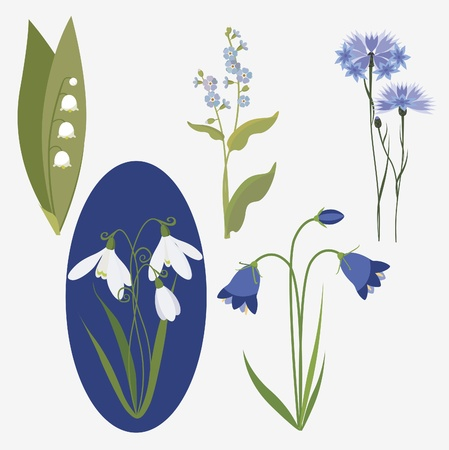 big collection of realistic wild flowers Vector