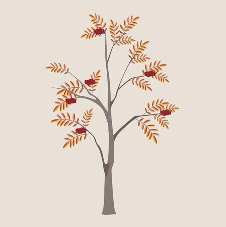 albero nocciola: ordinario cenere di montagna con una foglia e frutti di bosco Vettoriali