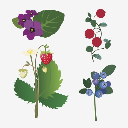 collection of realistic forest flowers and ripe berries Vector