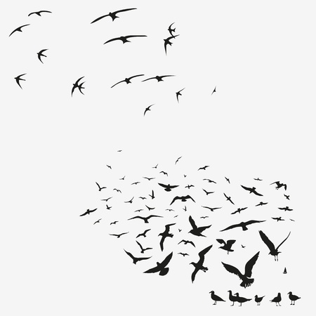 pack of seagulls print Vector