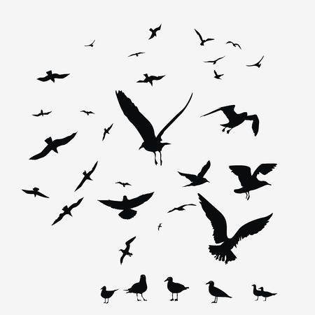 flying birds: pack of seagulls vector print