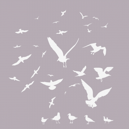 sea gull: pack of seagulls  print Illustration