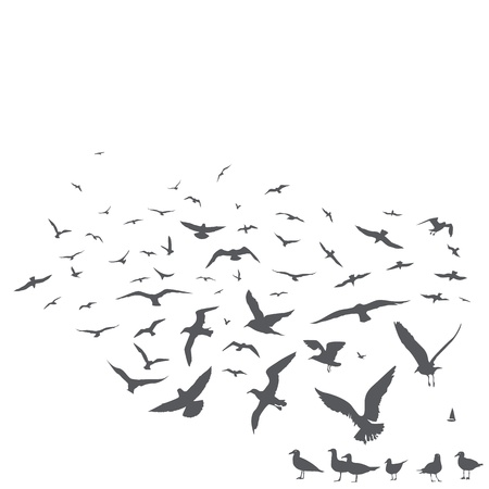 bird view: pack of seagulls print