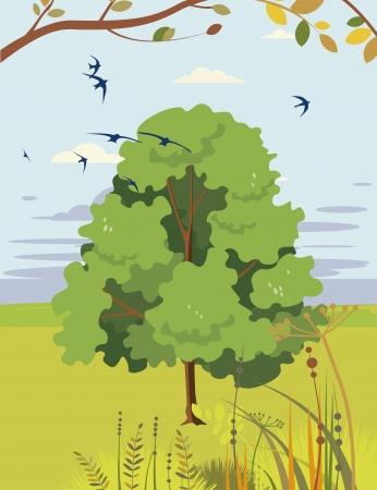 linden flowers: blossoming linden summer landscape Illustration