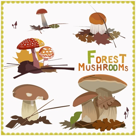 forest mushrooms Stock Vector - 18990213