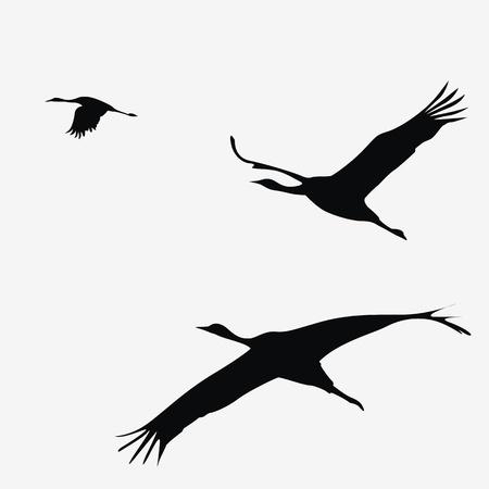 egret: crane pack  vector illustration