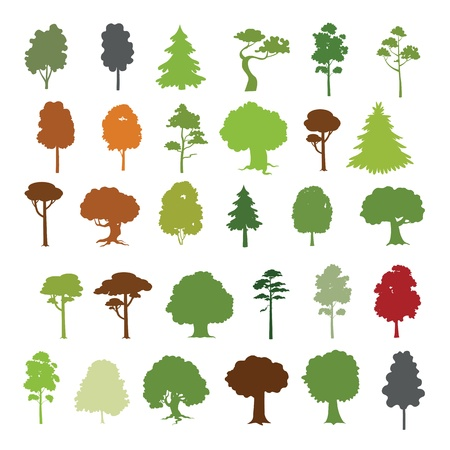 tilo: 30 Colección de los árboles