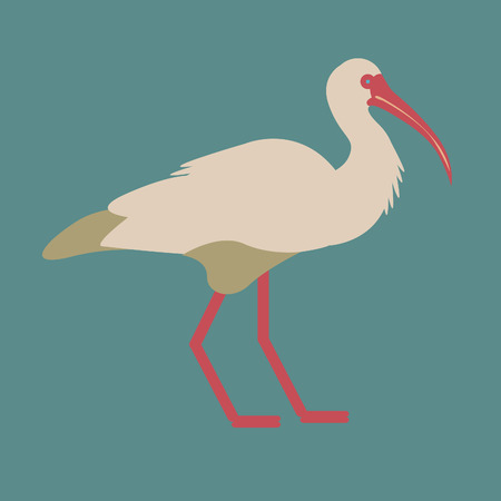 Vector illustration with wild ibis bird