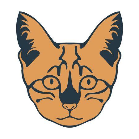 muzzle: Kitten muzzle