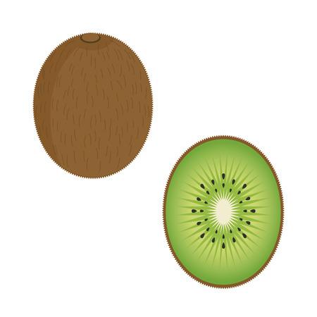 kiwi fruit: Kiwi fruta ilustraci�n