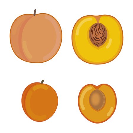 apricot: Peach and apricot in a section
