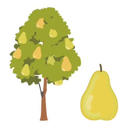 pear tree: Pear tree illustration Illustration