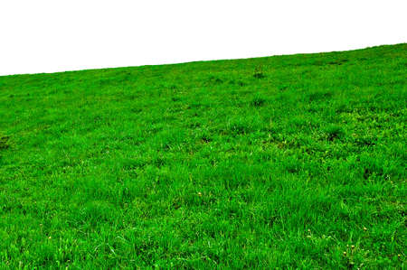 green meadow isolated on white