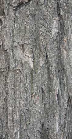 Bark of wood. Close-up. Stock Photo - 3114341