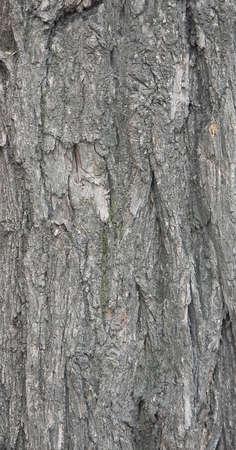 Bark of wood. Close-up. Stock Photo