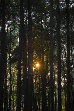 Wonderful tramonto nel bosco. La luce del sole tra gli alberi con riflesso lente Archivio Fotografico