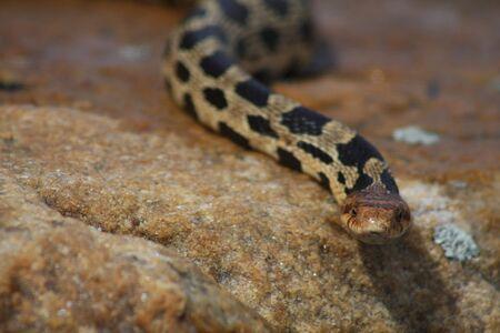 slang op rots