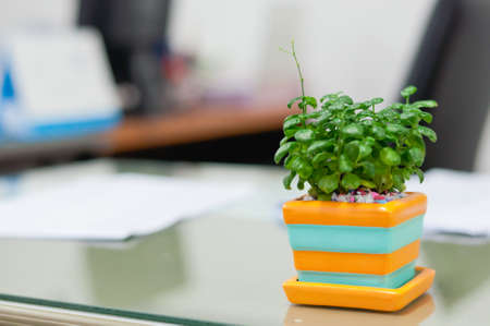 Pot plant on desk in work office.Soft focus. Stock Photo