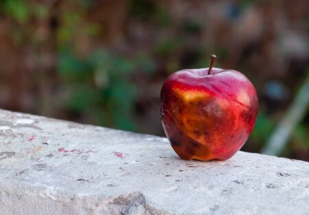 rancid: Rotten apple on concrete wall.Soft focus.