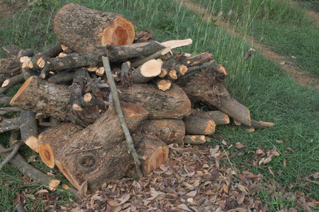 pyre: stack of firewood.